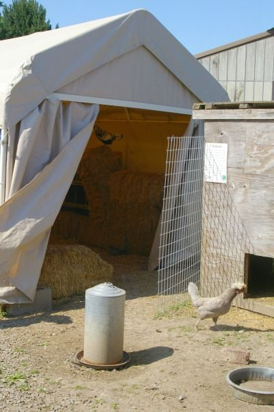 A small farm's story of a unique, inexpensive tent coop for keeping chickens, and the ancient 'deep litter' method for caring for chickens.