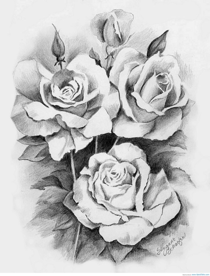 252 best Drawing Roses images on Pinterest | Drawings, Rose ...