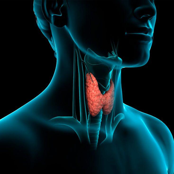 como memorizar si padece de tiroides