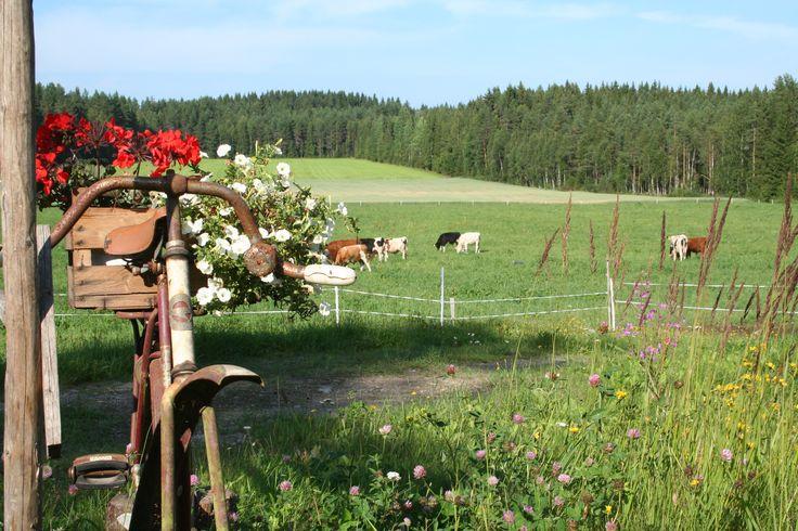 Idyllisestä maalaismaisemasta voi nauttia  Jokinotkon karjatilalla