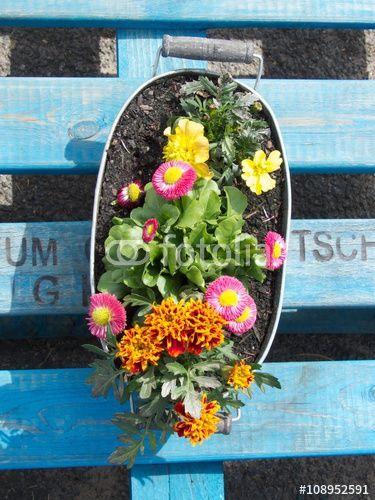 bunte fr hlingsblumen in einer pflanzschale aus gl nzendem blech auf einer blauen europalette in. Black Bedroom Furniture Sets. Home Design Ideas