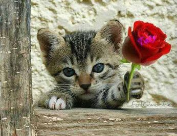 Flower For You - Cute Cat