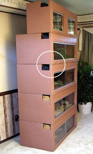 Bearded Dragon Cage would be cool for one or to with steps between floors