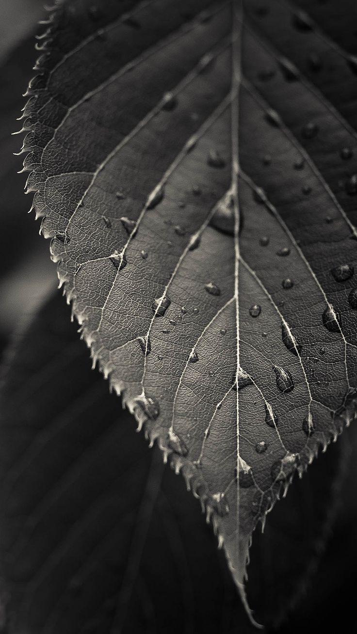 Wallpaper iphone gray - Gray Leaf Macro Iphone 7 Wallpaper
