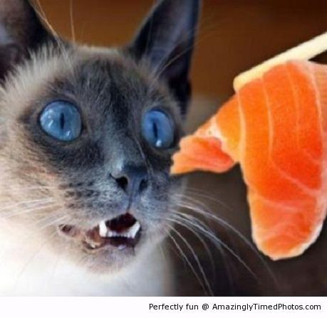 Cat's delicious reaction for sushi