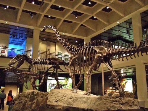 Imax Natural History Museum Houston