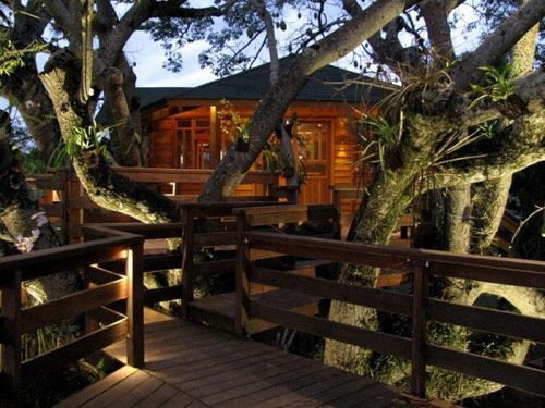Best Treehouse Builders Ideas On Pinterest Tree House