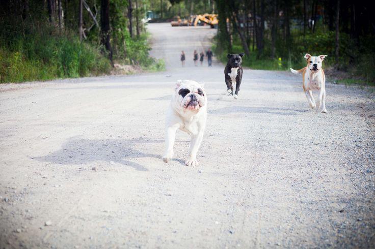 """Running of the Bulls - Part II"" - Jay, Skye & Tux"