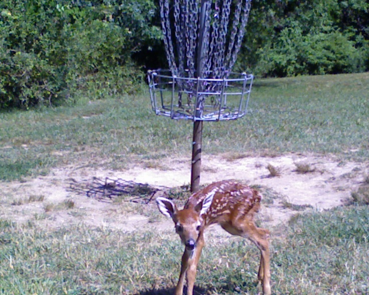 Disc Golf --- Bambi in front of a basket at a course in Lancaster, Ohio