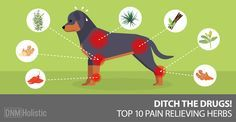 How can you relieve your dog's pain safely? NSAIDs are risky and can even damage cartilage. Check out these options for natural pain relief for dogs.