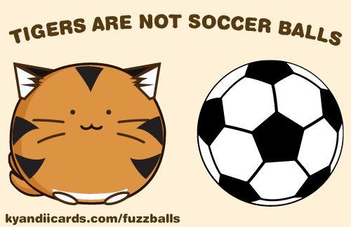 The Fuzzballs