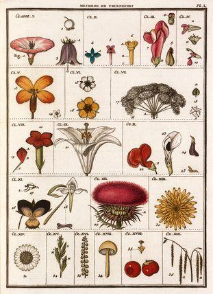 Jean Baptiste François Bulliard -- Plate I -- Botanical Plates -- RHS Prints