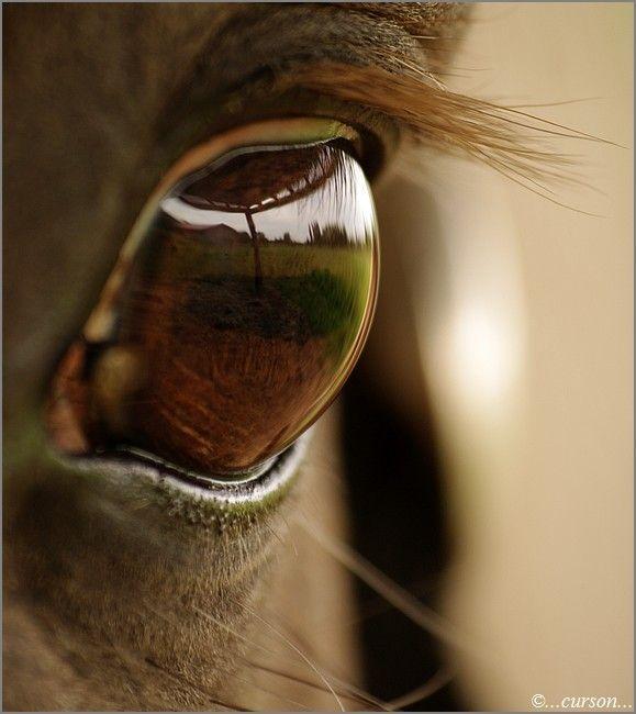 l'oeil du cheval : Ma passion pour la photographie
