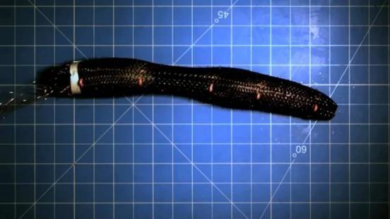 Soft autonomous robot inches along like an earthworm: Flexible design enables body-morphing capability