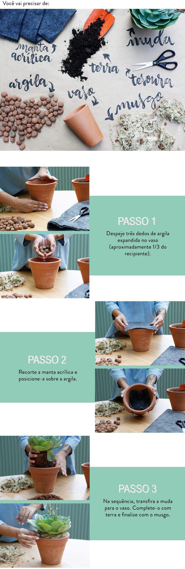 Aprenda como cuidar e cultivar cactos e suculentas: Assim como os bonsais, as suculentas crescem de acordo com o espaço que possuem.