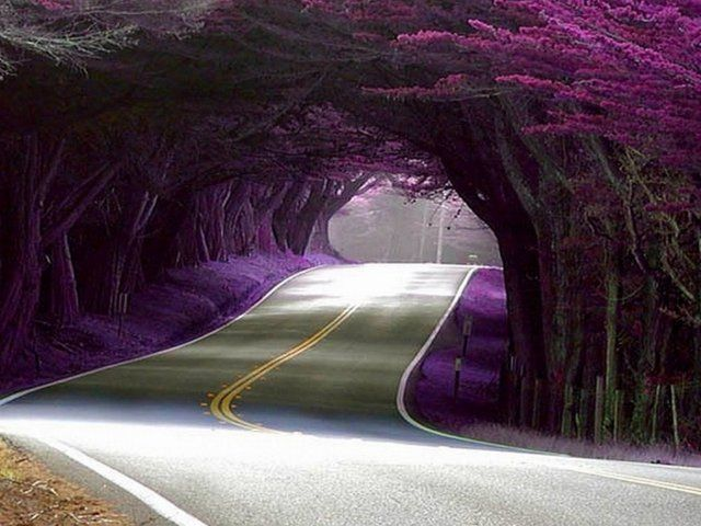 The yellow lines in the road make this picture - Tunnel of Trees @ HWY 1, California