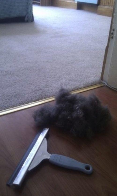 Obtenga pelo de los animales de una alfombra o los muebles con una escobilla de goma ventana. | 20 Simple Tricks To Make Spring Cleaning So Much Easier