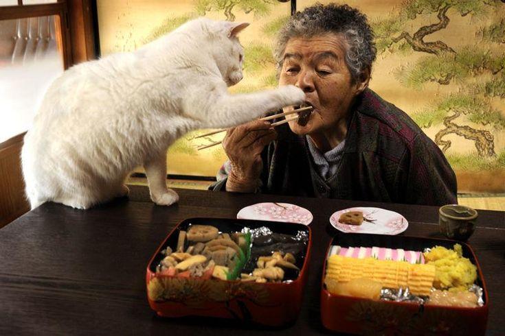Miyoko Ihara has been taking photographs of her grandmother, Misao and her beloved cat Fukumaru since their relationship began in 2003. Their closeness has been captured through a series of lovely photographs. 1-22-13 / Miyoko Ihara