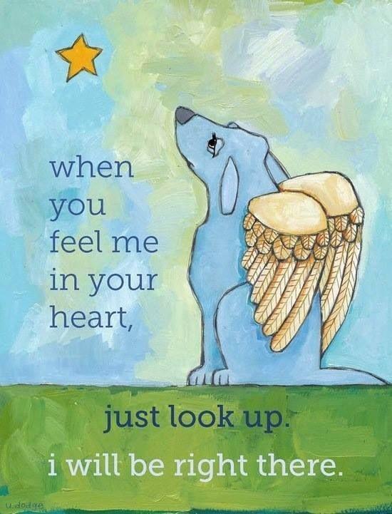 pinterest losing a pet | Rainbow Bridge Dog Heaven Poem