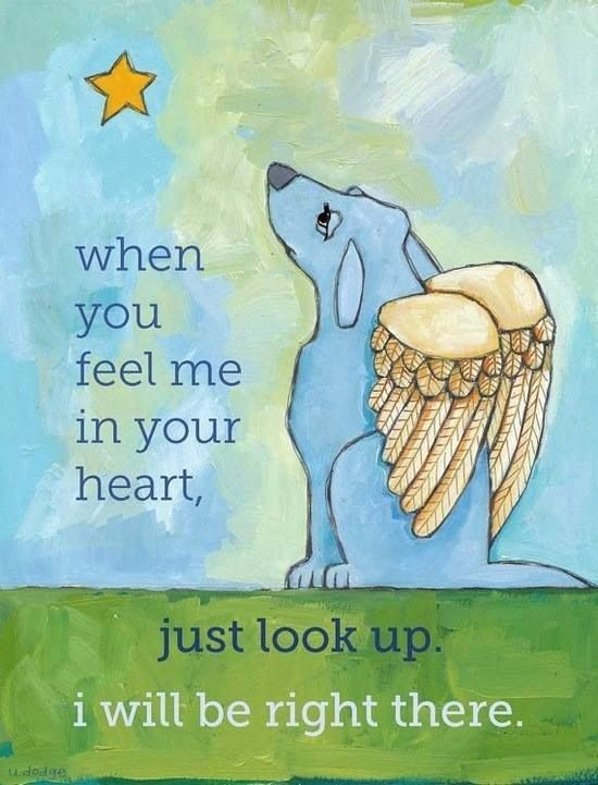 pinterest losing a pet | Rainbow Bridge Dog Heaven Poem