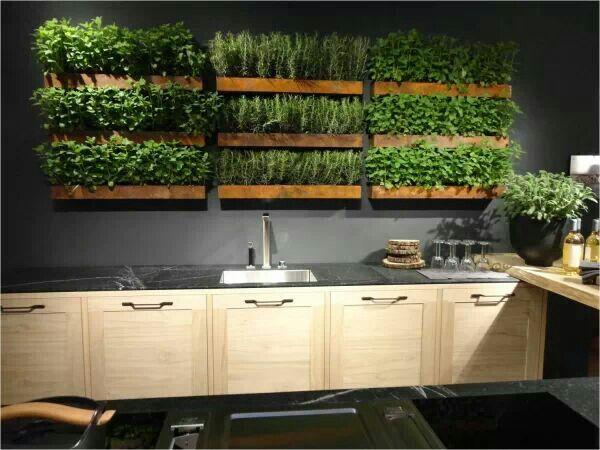Fantastic fresh herb garden in the kitchen