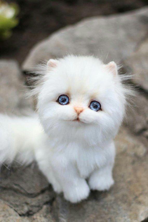 Kitten Lora Handmade Teddy Bear Collectible Toy Gift Cat Kittens Cute Baby Animals Baby Cats Kittens Cutest