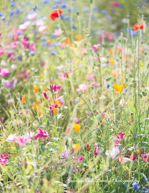prettylittleflower:    (via Summer Light @ Georgianna Lane)