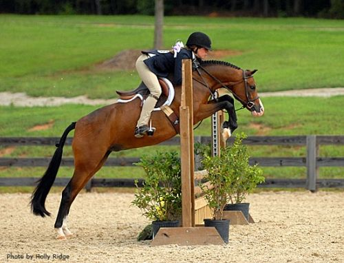 Falling Moon Celebration - medium pony @ exchangehunterjumper.com Holy moly I love ponies.
