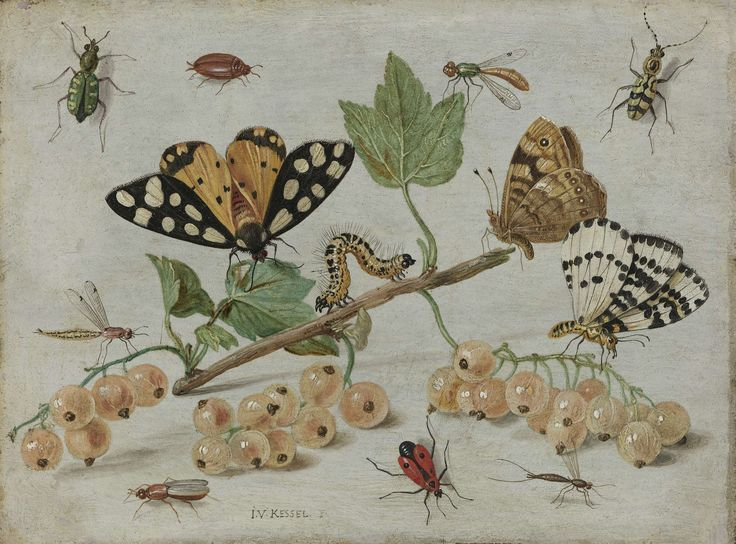 Insecten en vruchten, Jan van Kessel (I), ca. 1660 - ca. 1665