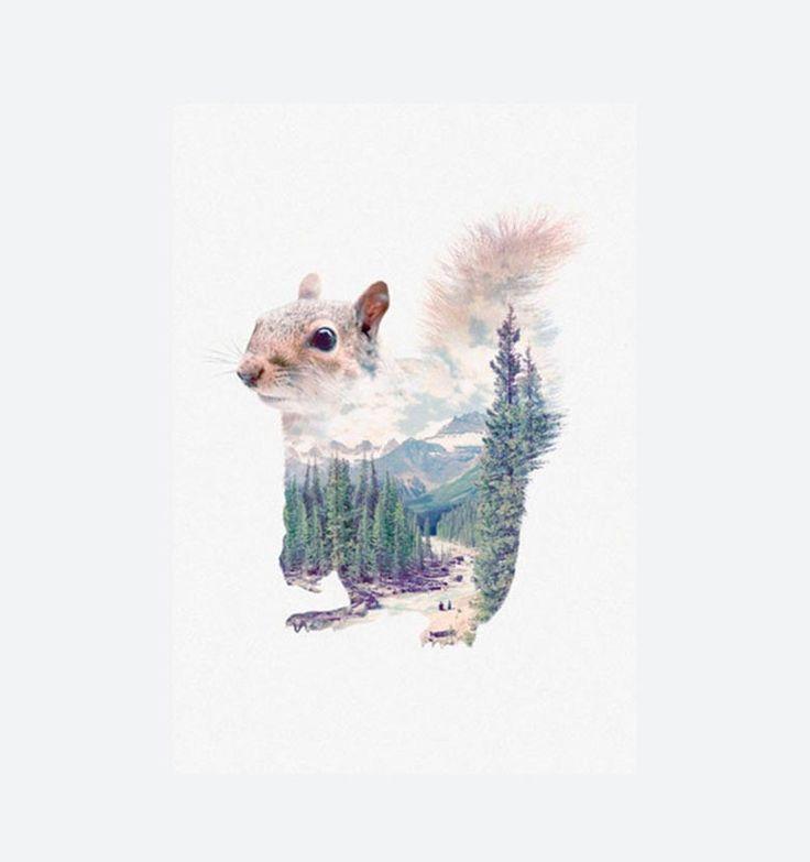 """SQUIRREL - Faunascapes - Plakaten """"Squirrel"""" fås i størrelserne A3 og 50x70 cm. Plakaten med motiv af et egern er en del af serien Faunascapes designet af WhatWeDo. Serien består af diverse dyremotiver, landskaber og vise ord og har alle et nordisk udtryk både i motiv og farvevalg. Motiverne er """"gennemsigtige"""" så den smukke natur får lov at skinne igennem."""
