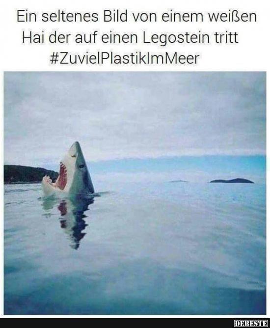 Ein seltenes Bild von einem weißen Hai..