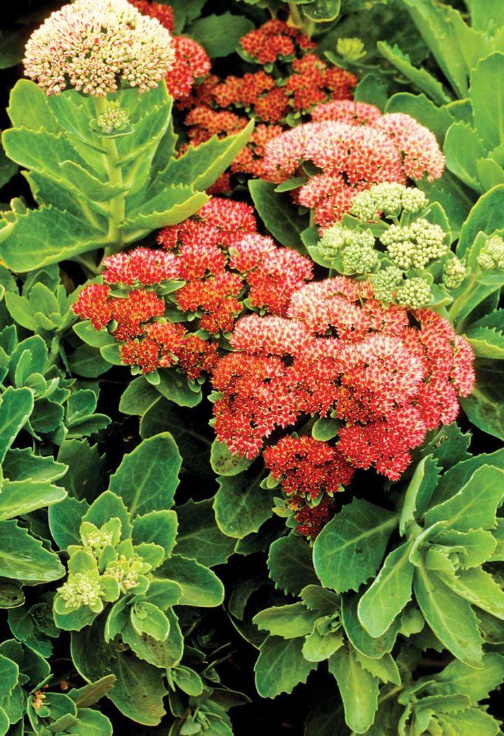 90 Best Garden Checklists Calendars Journals Catalogs