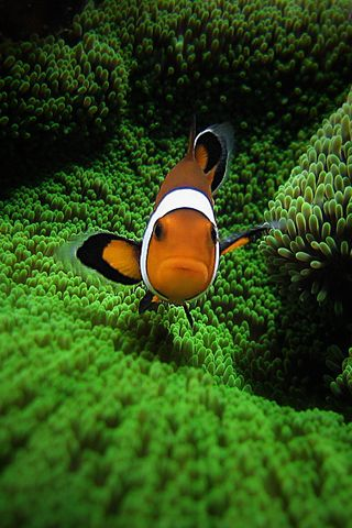 Clown Fish by Pedro GonioUnderwater Photos, Real Life, Most Popular, Clowns Fish, Clown Fish, Underwater Photography, Amazing Nature, Clownfish, Animal