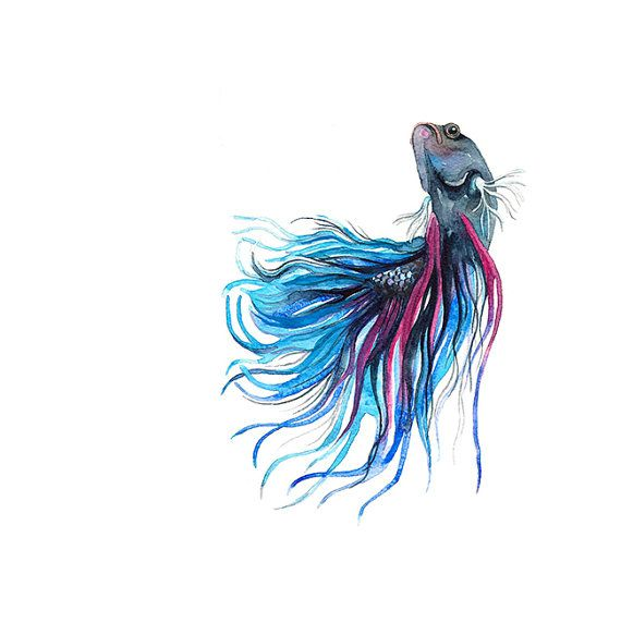 Siamese Fighting Fish Watercolor Illustration Print Turquoise Navy Blue Purple Sea