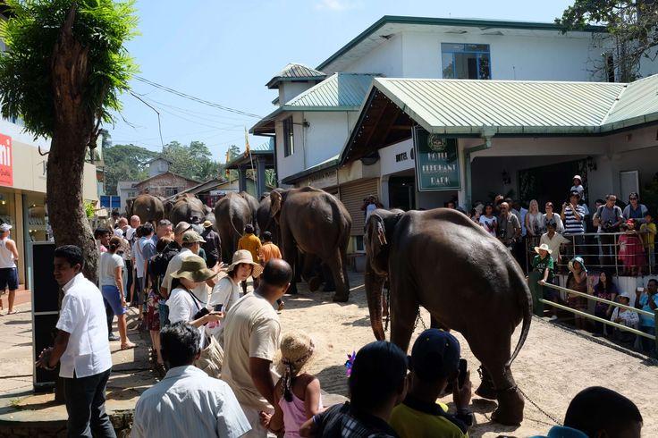 Mnoho mahútov čelí obvineniam z príliš krutého a násilného správania k slonom. Bitky palicami s ostňami sú len začiatok. Kam až vedie biznis so slonmi?