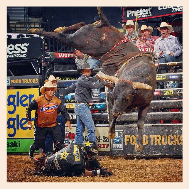 17 best 8 Second Ride images on Pinterest | Bucking bulls ...