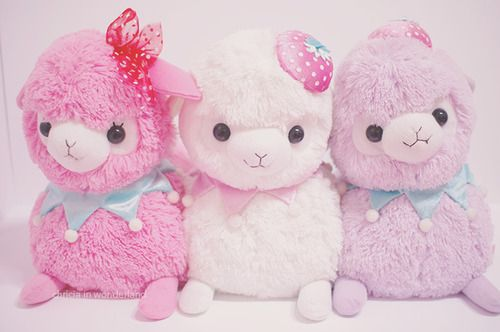 17 Best images about Alpacasso on Pinterest Kawaii shop, Next day and Happy girls