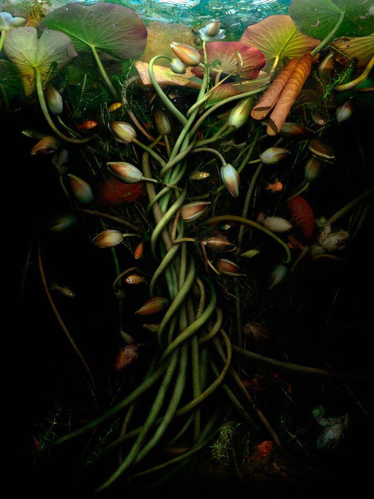 catherine-nelson-submerged-designboom-02