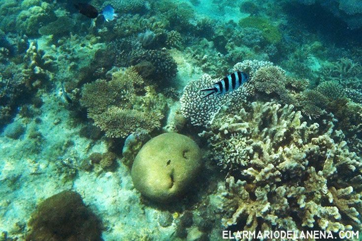 snorkel - Tumbatu Island (Zanzibar . Tanzania)