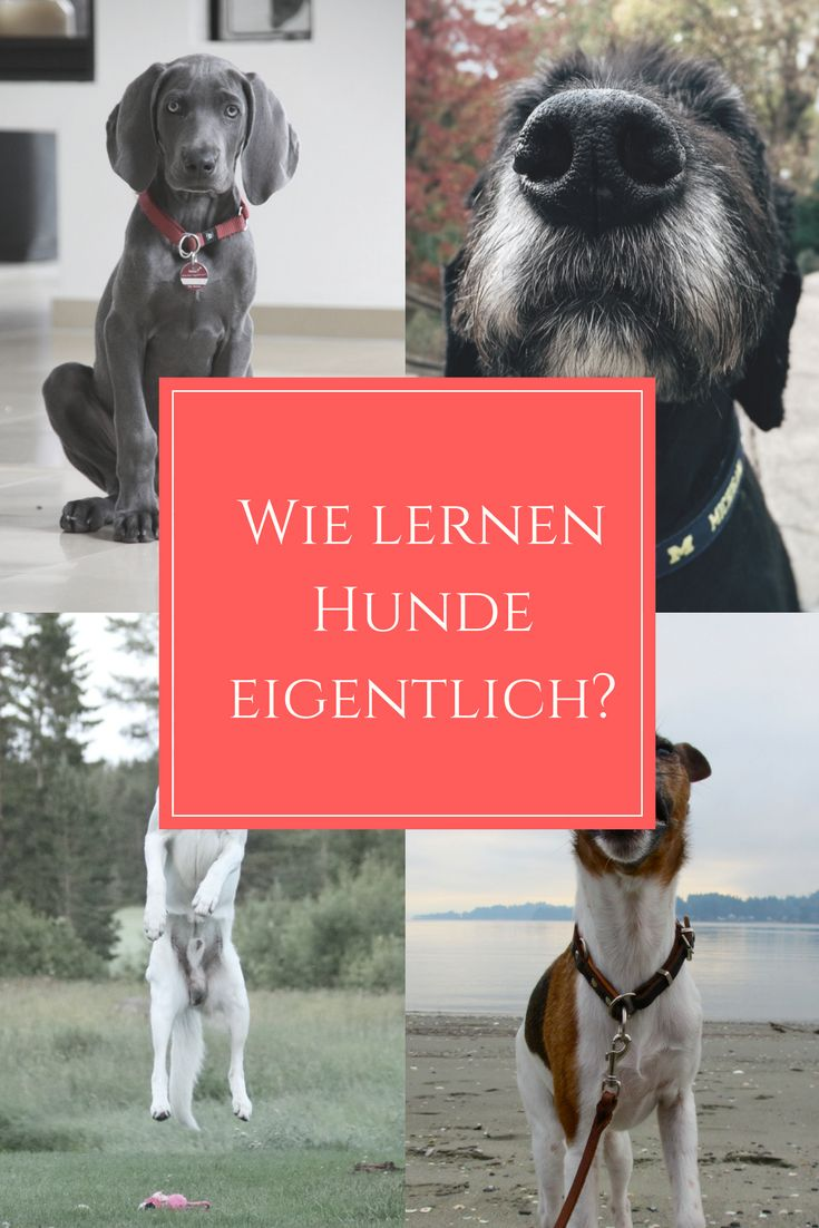 444 best images about hunde diy on pinterest homemade dog treats diy dog and training. Black Bedroom Furniture Sets. Home Design Ideas