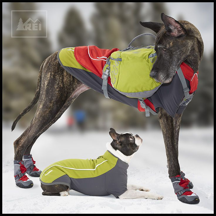 It's pretty cold out there. Is your #adventuredog ready for winter?