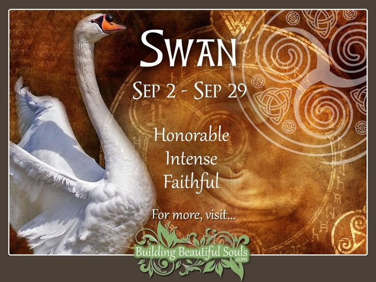 Celtic Swan Zodiac Sign Dates:September 2 – September 29 The ever lovely swan whose eye for beauty knows no bounds. These are very noble people with specific tastes and passions. People sometimes …