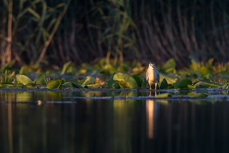 Reflection by ionel onofras