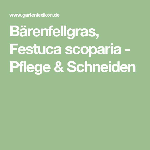 Bärenfellgras, Festuca scoparia - Pflege & Schneiden