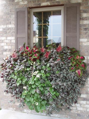 Window Box Planter http://www.floralexpressionsjanesville.com/