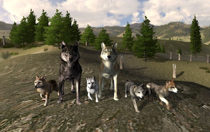 Wolf Online has taken that experience and adds both co-op and PVP options with players from around the world. In PVP options, you will be battling other species of wolf for dominance (you can play as either a mountain wolf, wild wolf or snow wolf).
