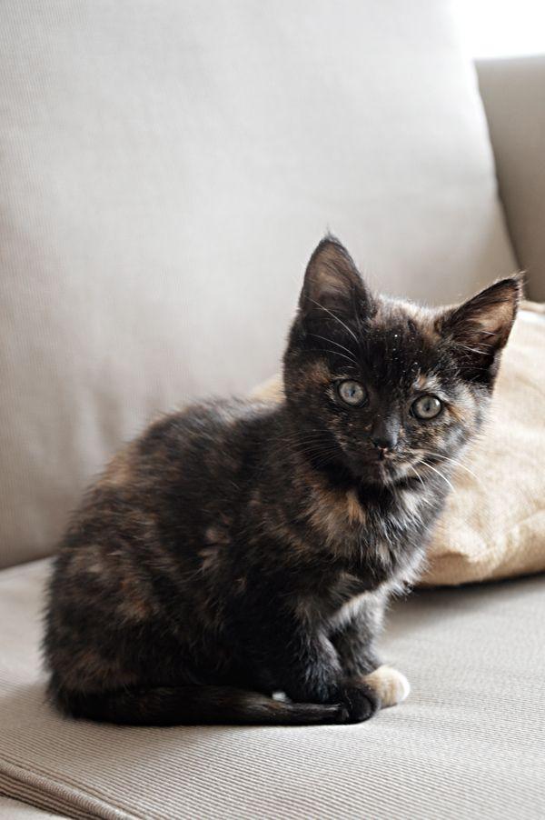 Tortoiseshell   Foster Kittens by Courtney Field, via Behance