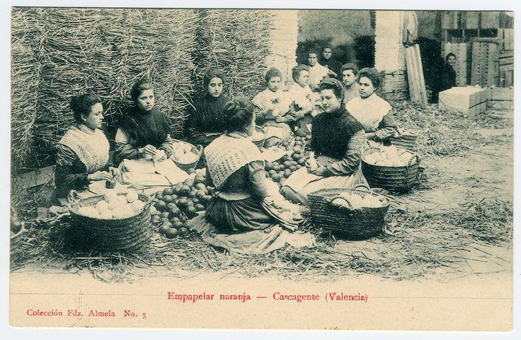 Empapelar naranja.  : Carcagente (Valencia). (1905 a. de)
