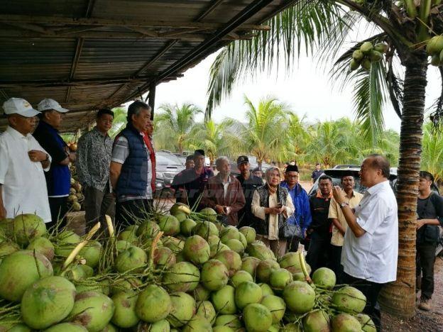 Ladang kelapa paling berjaya di Malaysia   Pihak pengurusan Ambang Perintis Sdn Bhd sedang memberikan taklimat kepada Pemangku Sultan Pahang Tengku Mahkota Abdullah ketika sesi lawatan ke ladang kelapa di Kampung Kerpal di sini.  KUALA ROMPIN - Ladang kelapa di Kampung Kerpal di sini seluas 404 hektar dijangka mampu mengeluarkan hasil sebanyak 6 juta biji bagi tahun ini. Ladang yang dibangunkan pada 2009 itu merupakan terluas di Malaysia melibatkan tiga jenis kelapa iaitu kelapa pandan mataq…