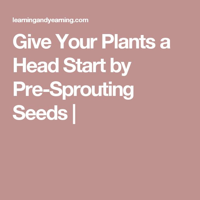 Give Your Plants a Head Start by Pre-Sprouting Seeds |